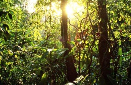green-leafy-jungle-mural-wallpaper-forest-plain-820x532